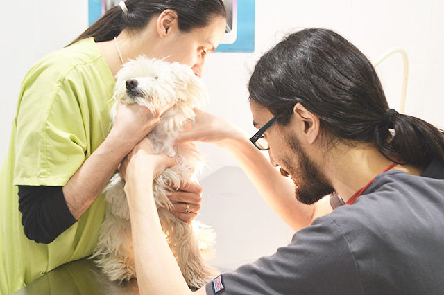 clinica veterinaria vetsants barcelona sants